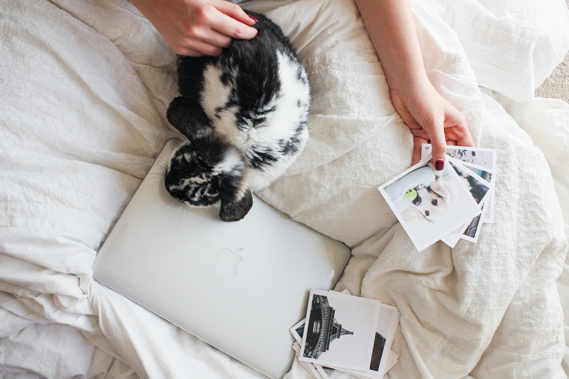 best bed sheets for pet hair